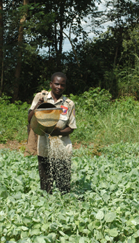 Manual irrigation of cabbage in Mozambique